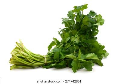 a bundle of cilantro on white background