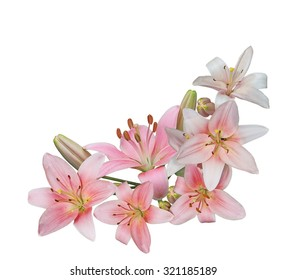 Bundle of fresh pink lily flower isolated on white background
