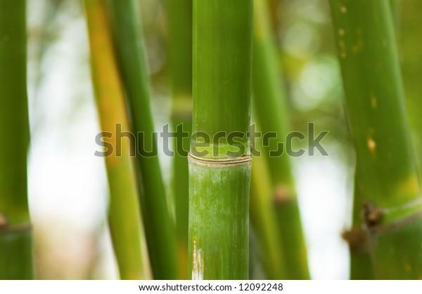 A bundle of green bamboo in garden