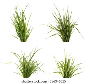 bundle of green grass isolated on white background. Set