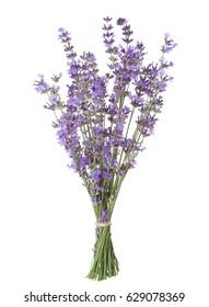 Bundle of lavender isolated on white background