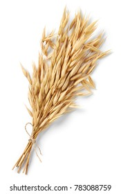 bundle of oat plant isolated on white