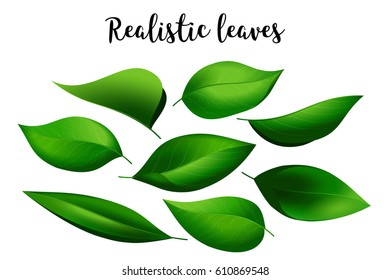 bundle of realistic looking green leaves; isolated elements for eco/vegetarian lifestyle promotion, earth day celebration, also for banners, posters, greeting cards, web design; high quality jpeg