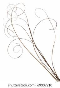 Bundle of thin ornamental curly sticks. Very high-res. Clean edges, no shadows.