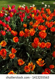 Bundle of tulips in garden with lovely springtime colors.