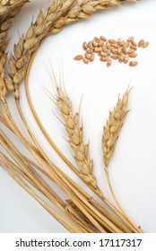Bundle of wheat and seeds studio isolated on white