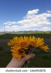 Bundle of yellow flowers from Idaho.