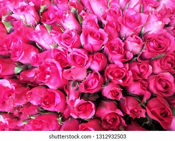 Bundles of red roses for Valentines Day