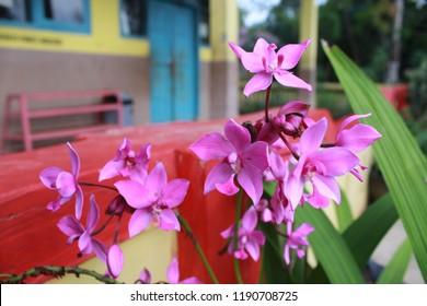 Bunga Dapat Muncul Secara Tunggal Maupun Bersama Sama Dalam Satu Rangkaian Bunga Yang Muncul