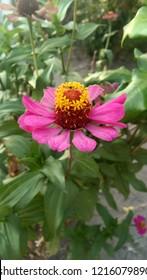 bunga halaman rumah