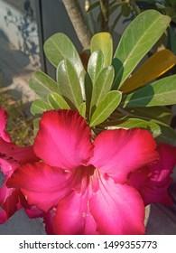 Unduh 460 Koleksi Gambar Bunga Mawar Yang Sangat Indah Paling Keren
