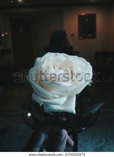 Bunga Mawar Putih Stock Photo Edit Now 1274103373