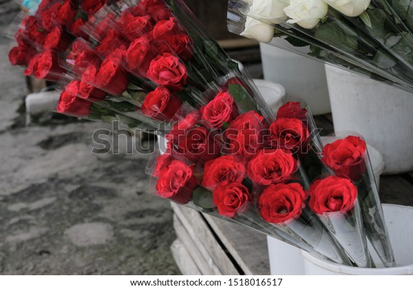 Bunga Mawar Warna Warni Colorful Roses Stock Image Download Now