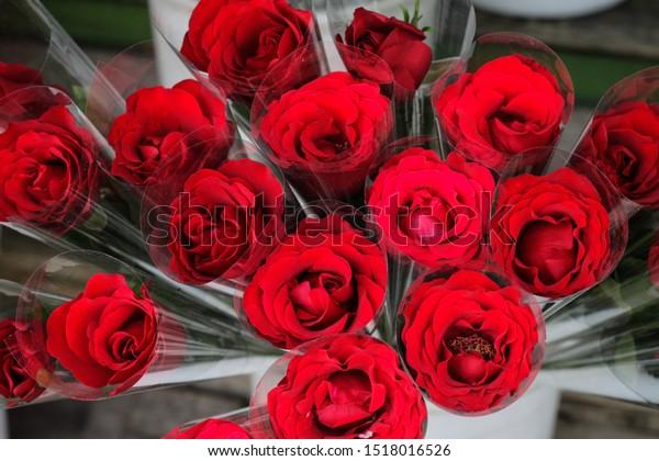 Bunga Mawar Warna Warni Colorful Roses Stock Photo Edit Now