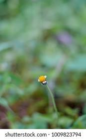 Bunga yang cantik