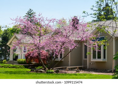 Bungalow house with a blooming tree