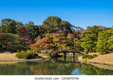 """BUNKYO, TOKYO / JAPAN - NOVEMBER 30 2018 : Fall scenery of """"Rikugi-en Garden"""". You can see a beautiful Japanese garden consisting of autumn leaves trees and pond."""