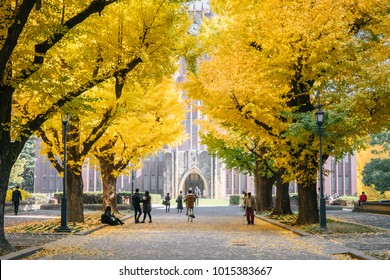 Bunkyo,Tokyo/Japan - November 29 2017: people watching Ginkgo yellow leaves at the road in front of the famous clock tower of the University of Tokyo called 'Yasuda Auditorium'