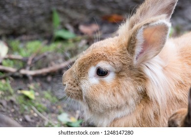 Bunny close up view outdoors