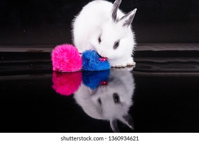 Bunny and colorful balls on a black background