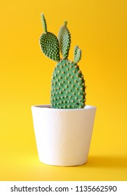 Bunny ears cactus in a white planter, isolated on a bright yellow colored background.