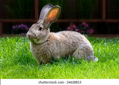 bunny eating grass from bright green pasture