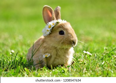 Bunny in grass, daisy coronet, spring and easter