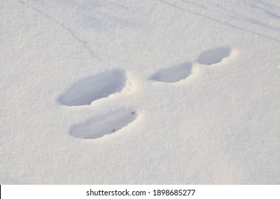 The bunny left its mark on the fluffy snow