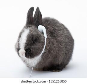 Bunny listening to music