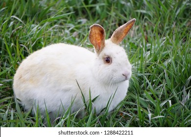 Bunny with perked up ears in grassy field
