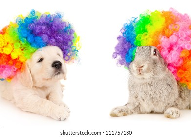 Bunny and puppy in wigs clown, isolated on white