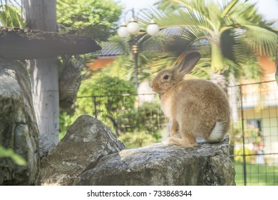 Bunny or Rabbit brown in the pet cage.