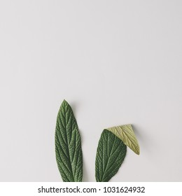 Bunny rabbit ears made of natural green leaves on bright background. Easter minimal concept. Flat lay.