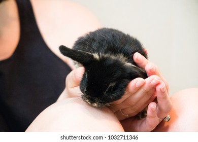 bunny rabbit hold in female hands