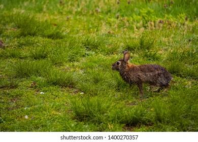 Bunny Rabbit in the Woods