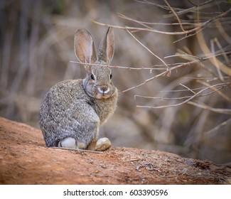 Bunny Rabit