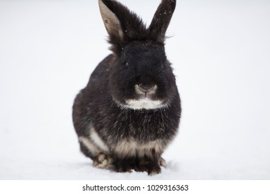 Bunny in snow