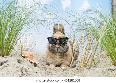 bunny with sunglasses in a artificial dune landscape
