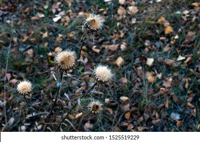 Burdock bush in the autumn forest. Dry fallen leaves lying on the ground.