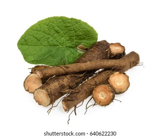 Burdock root isolated