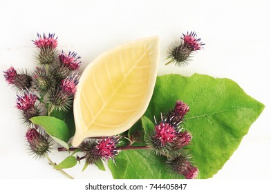 Burdock root oil extract. Oil in ceramic plate with fresh green leaves and burs, top viewed. Natural herbal skincare recipe.