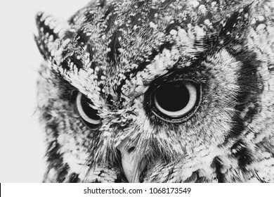 "The bureaucratic owl, also called field-buckthorn, field owl, owl-owl, buck-owl, owl-owl, guede, urucura, urucurian and urucuriá, is called ""buraqueira"" in holes dug in the ground"