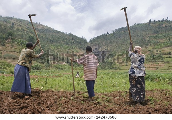 BURERA, RWANDA - SEPTEMBER 2008: Women at work in dried marshlands.Rwanda today is a story of renewal and rapid economic development; only 20 years ago the country was torn apart by the genocide.