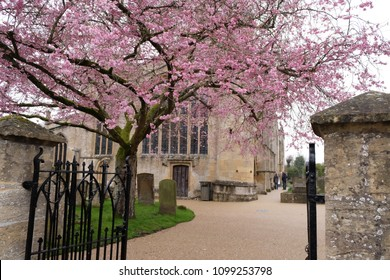 Burford Parish Church's graveyard with cherry blossom in Spring, Burford, UK