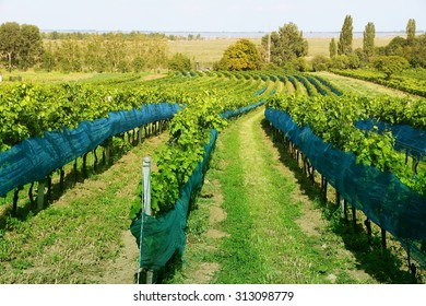 Burgenland, Austria - wine growing region by the Lake Neusiedl in National Park Neusiedler See-Seewinkel. UNESCO World Heritage Site. Filtered style colors.