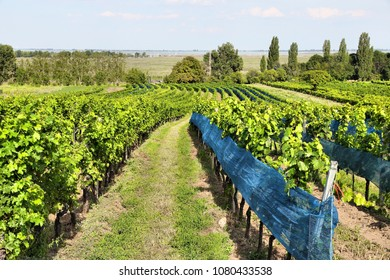 Burgenland, Austria - wine region by the Lake Neusiedl in National Park Neusiedler See-Seewinkel. UNESCO World Heritage Site.