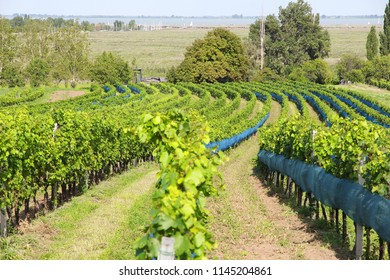 Burgenland, Austria - wine region by the Lake Neusiedl in National Park Neusiedler See-Seewinkel. UNESCO World Heritage Site.