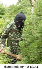 Burglar hidden behind a pine in the garden