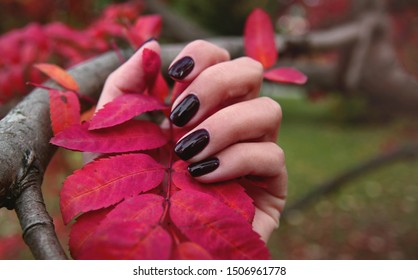 Burgundy brown  manicure on fingers holds red fall leaf in hand on autumn leaves background.  Close up autumn manicure concept