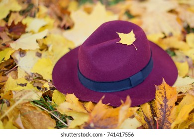 burgundy felt hat on autumn leaves